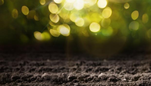 Eine braune Erdfläche und im Hintergrund grüne Lichter als Symbolpic für Braune Ideologie im Naturschutz.